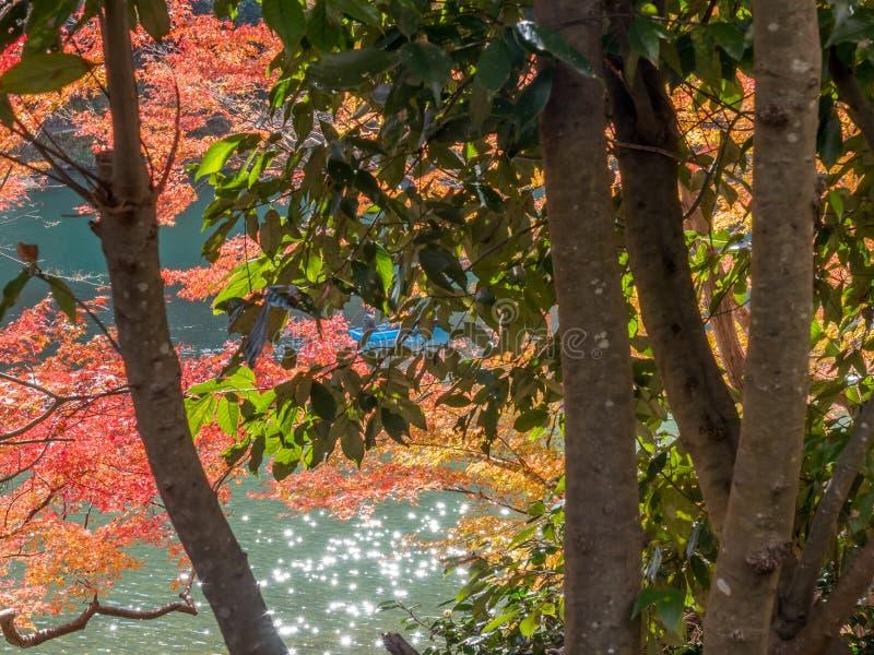 Foglie variopinte lungo il fiume in Arashiyama, Giappone fotografie stock libere da diritti