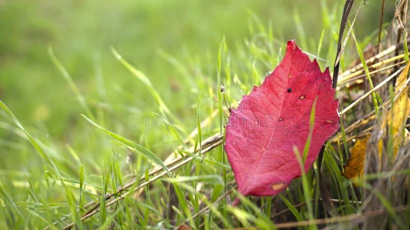 Foglie variopinte sull'erba fotografia stock