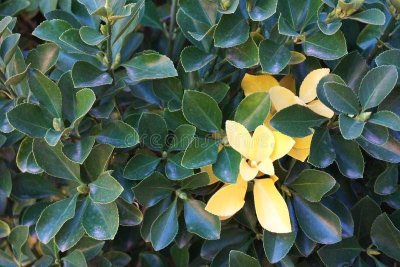 Foglie verde intenso con giallo di contrapposizione fotografie stock libere da diritti