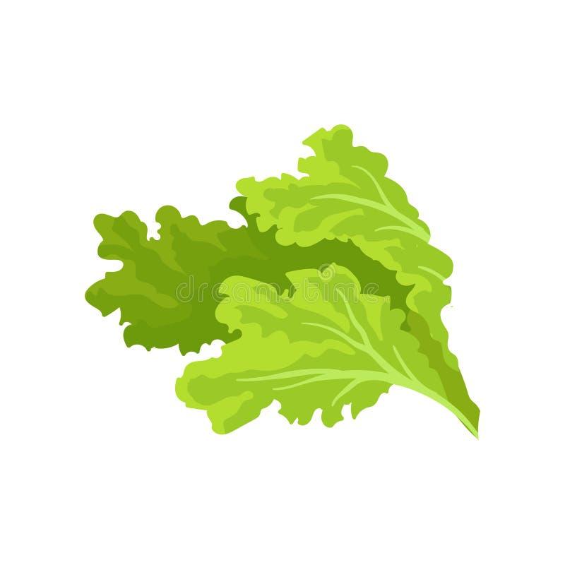 Foglie verde intenso della lattuga Verdura fresca e sana Nutrizione vegetariana Vettore piano per la pubblicità del manifesto di royalty illustrazione gratis