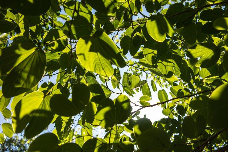 Foglie verde intenso sui rami fotografie stock libere da diritti