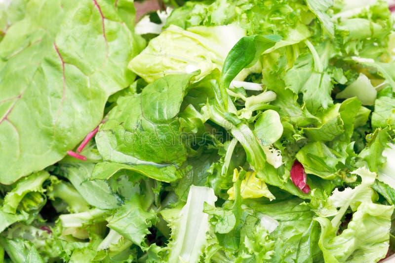 Foglie verdi in aperitivo italiano fresco della lattuga fotografia stock