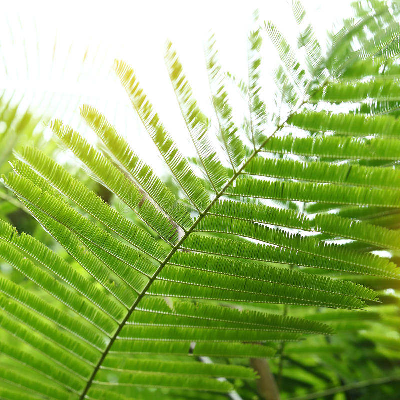 Foglie verdi astratte in natura, luce solare tramite la foglia sull'albero fotografie stock