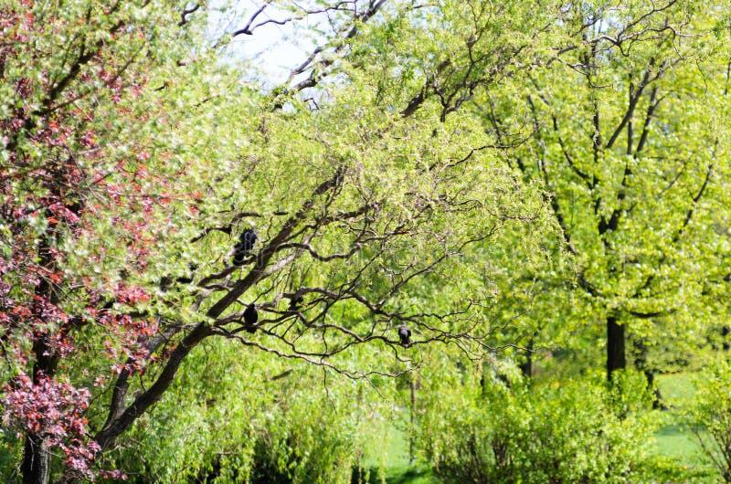 Foglie verdi che pendono da un albero nella foresta, grande fondo della sfuocatura Uccelli neri La foto può essere usata come fon fotografia stock