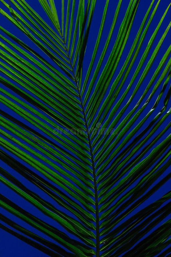 Foglie verdi con l'estratto verde di vibrazioni fotografie stock libere da diritti