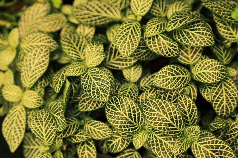 Foglie verdi con lo sfondo naturale del modello bianco fotografia stock