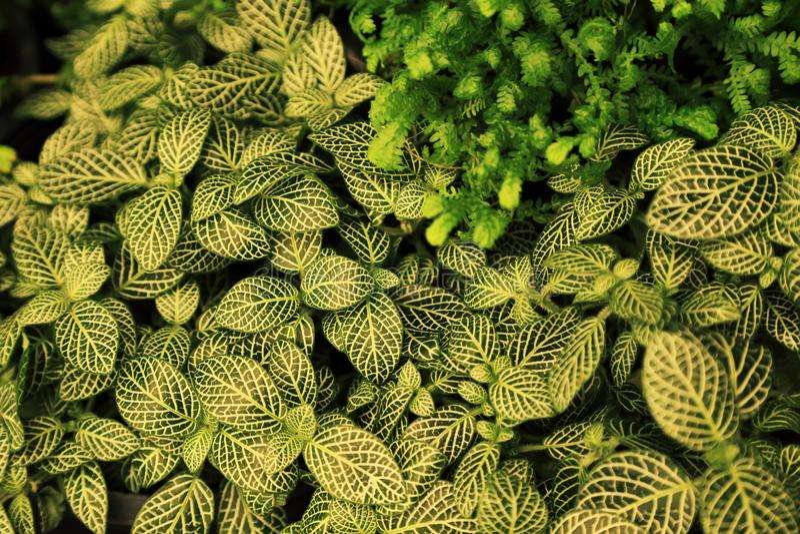 Foglie verdi con lo sfondo naturale del modello bianco fotografia stock libera da diritti