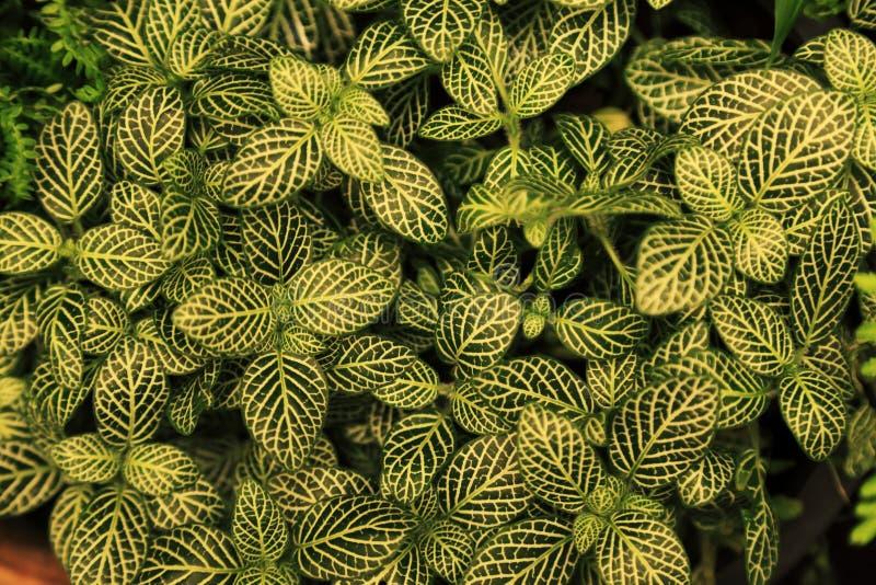 Foglie verdi con lo sfondo naturale del modello bianco immagine stock libera da diritti