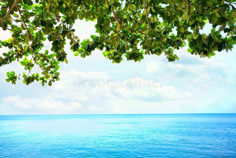 Foglie verdi dall'albero sporgentesi sopra l'orizzonte blu dell'oceano immagini stock libere da diritti