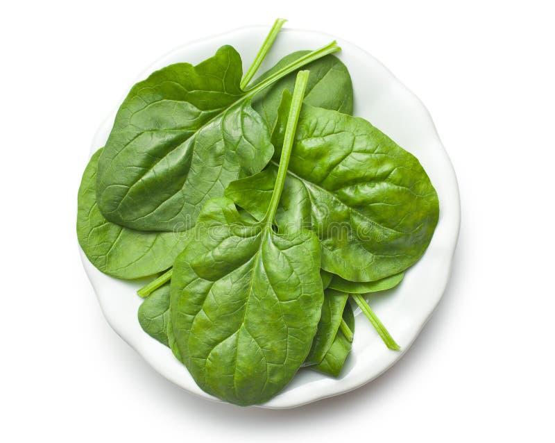 Foglie verdi degli spinaci sul piatto fotografia stock