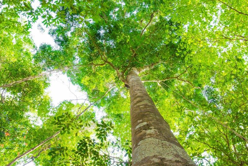 Risultati immagini per alberi foglie verdi luce