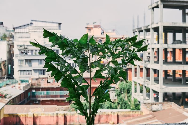 Foglie verdi della palma sul balcone fotografie stock libere da diritti