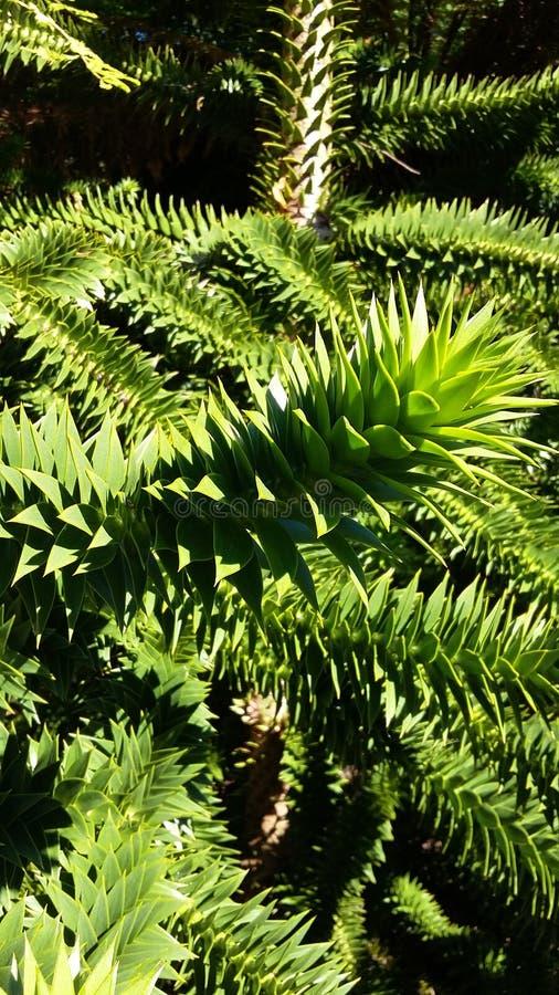 Foglie verdi di spikey fotografie stock