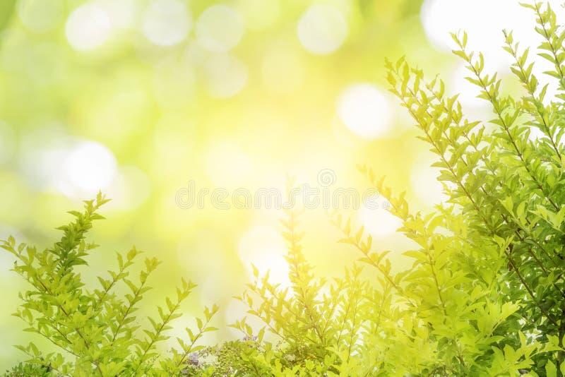 Foglie verdi e fondo astratti del modello delle gocce di acqua fotografie stock libere da diritti