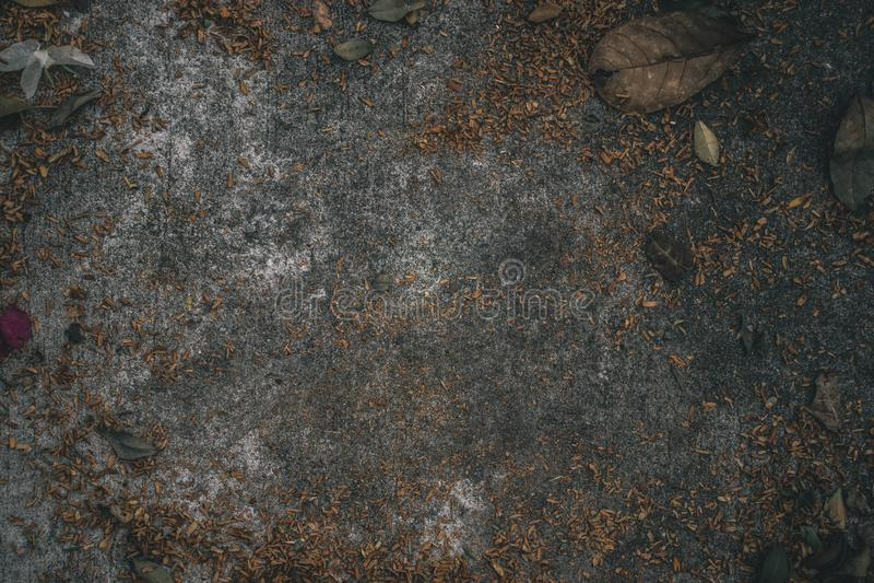 Foglie verdi e fondo concreto del pavimento fotografie stock libere da diritti