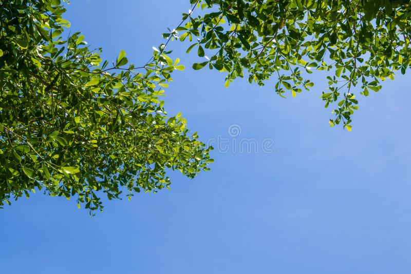 Foglie verdi e rami con il fondo del cielo blu per la terra astratta di amore della natura dell'ambiente di struttura immagine stock