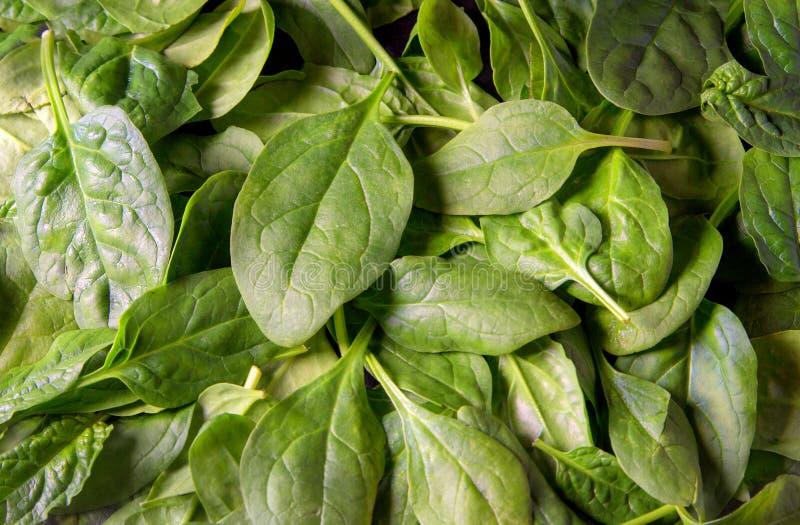 Foglie verdi fresche degli spinaci del bambino come fine del fondo su fotografia stock