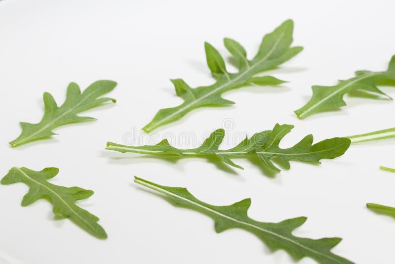 Foglie verdi fresche della rucola italiana isolata sul piatto bianco immagini stock libere da diritti