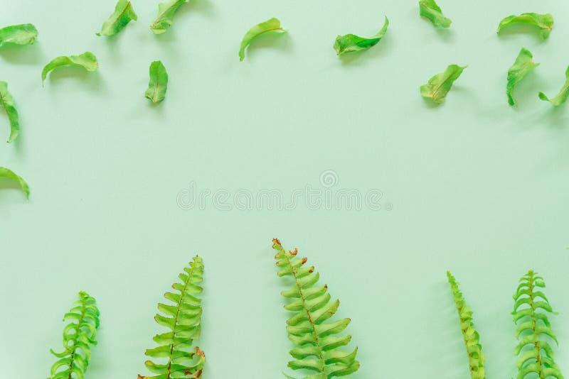 Foglie verdi minime su fondo verde fotografie stock libere da diritti