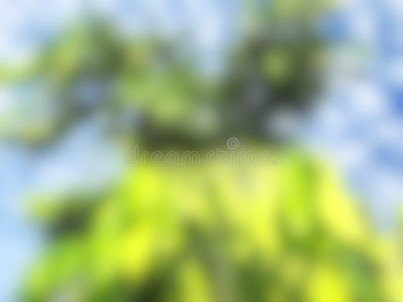 Foglie verdi naturali della sfuocatura Defocused, nuvole bianche, cielo blu, verde astratto e fondo blu di colore immagine stock libera da diritti