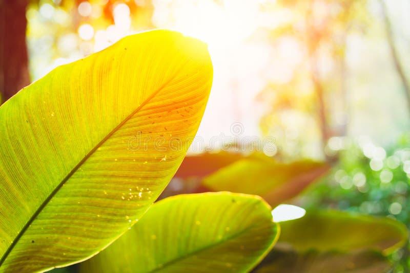 Foglie verdi piante forestali con luce solare scienza della natura della fotosintesi e della clorofilla immagine stock libera da diritti