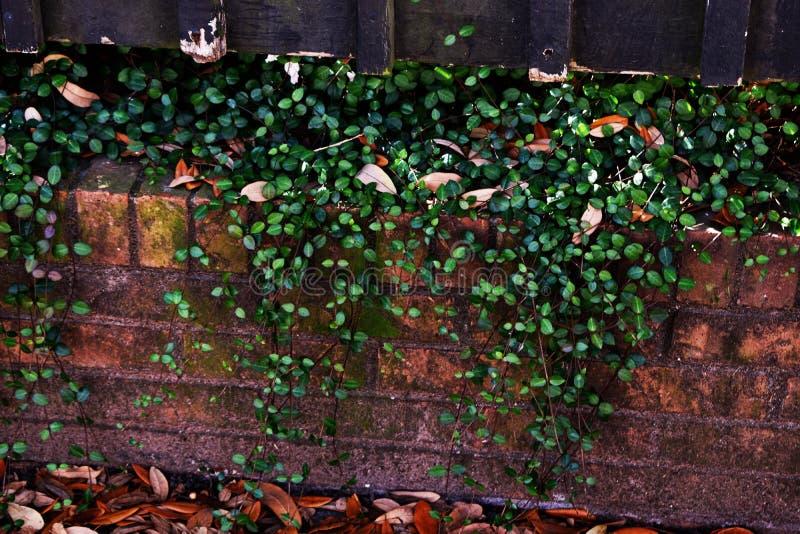 Foglie verdi selvagge immagini stock