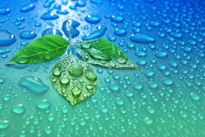 foglie verdi su energia blu di ecologia del fondo della goccia di acqua del pla fotografie stock