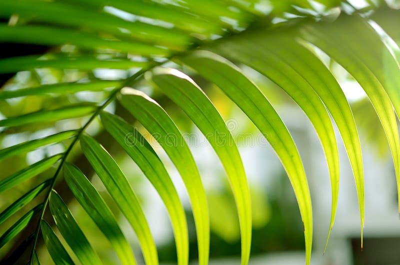 Foglie verdi su sole, fondo astratto del bokeh immagine stock