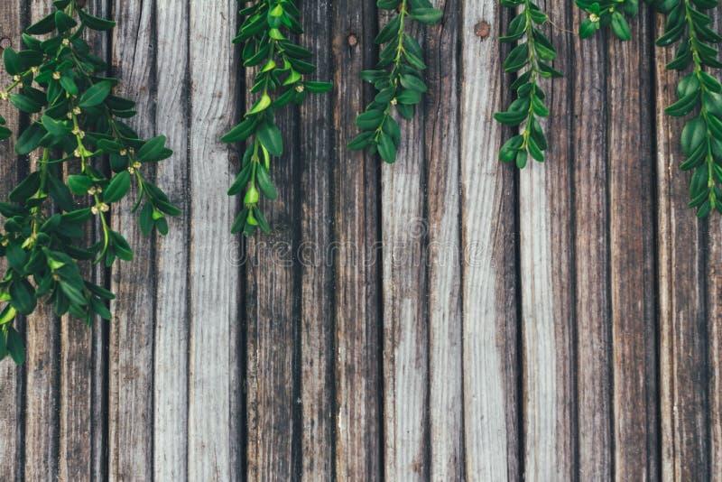 Foglie verdi sui vecchi precedenti di legno fotografie stock libere da diritti