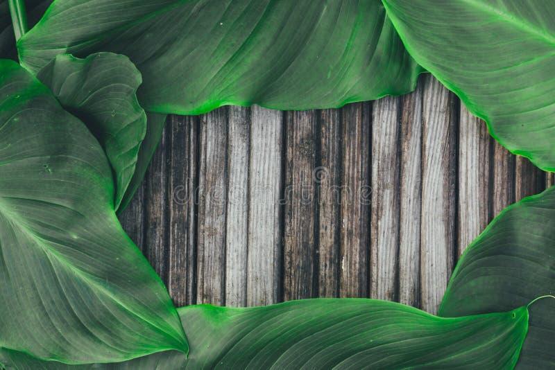Foglie verdi sui vecchi precedenti di legno fotografia stock