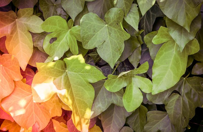 Foglie verdi sulla copertura di tutta la parete Carta di parete e del fondo fotografie stock