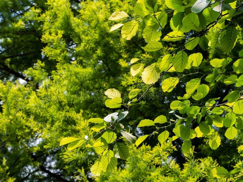 Foglie verdi un giorno soleggiato luminoso fotografie stock libere da diritti