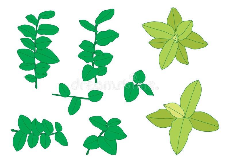 Foglie verdi una foglia verde su fondo bianco illustrazione di stock
