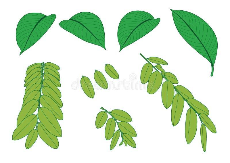 Foglie verdi una foglia verde su fondo bianco royalty illustrazione gratis
