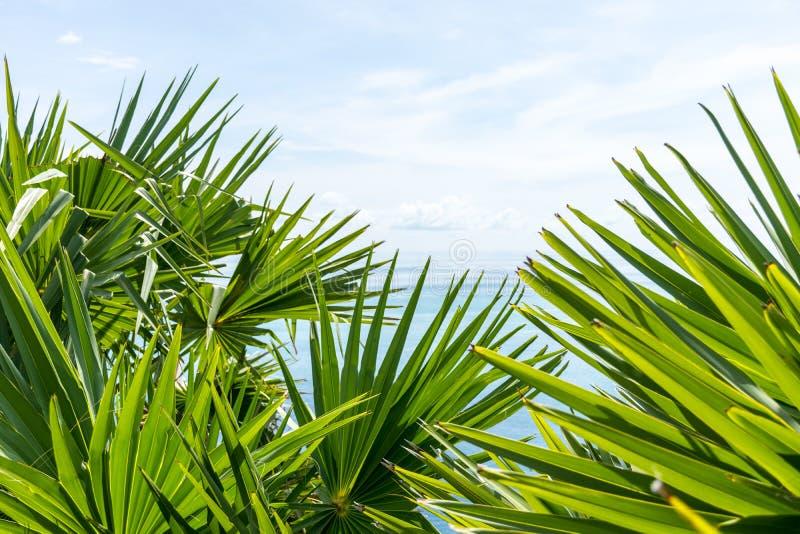 Foglii di palma con cielo blu ed il mare immagini stock