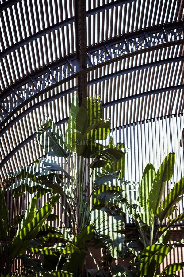 Foglii di palma con le ombre a strisce immagini stock libere da diritti