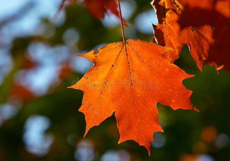 Download Foglio immagine stock. Immagine di caduta, luce, arancione - 204023