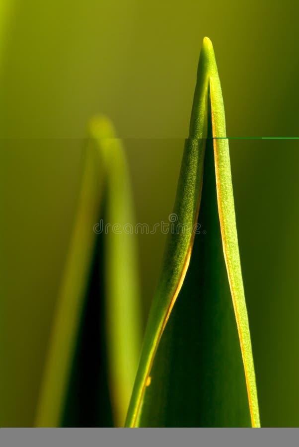 Download Foglio immagine stock. Immagine di nave, pianta, naughty - 3894333