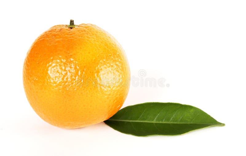 Foglio arancione fotografie stock libere da diritti