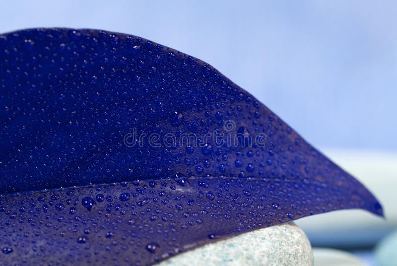 Download Foglio blu immagine stock. Immagine di nave, particolare - 7323277