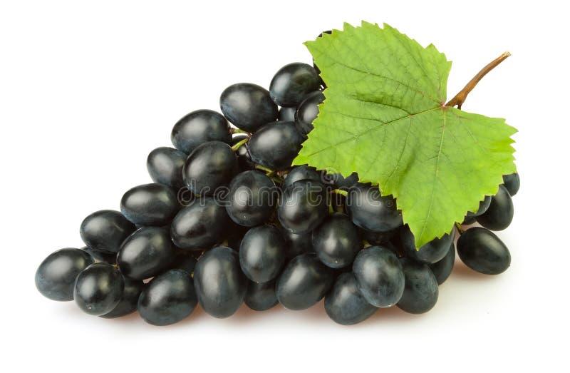 Foglio blu dell'uva immagini stock