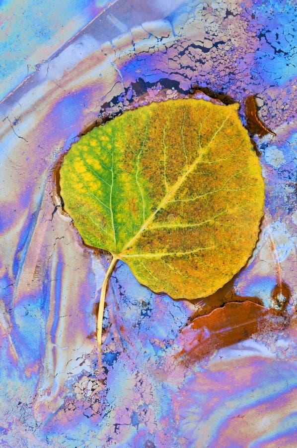 Foglio dell'Aspen ed oli vegetali fotografia stock libera da diritti