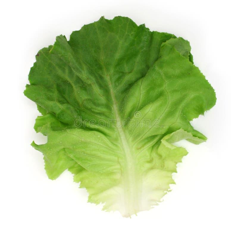 Foglio dell'insalata immagine stock