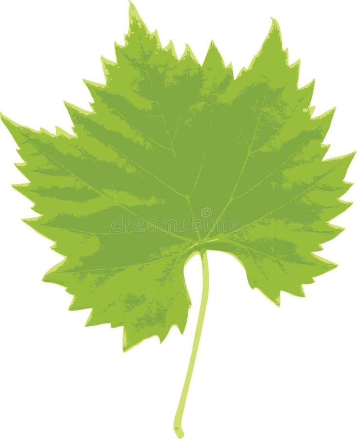 Foglio dell'uva illustrazione vettoriale