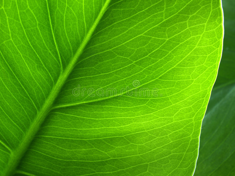 Foglio della pianta immagine stock