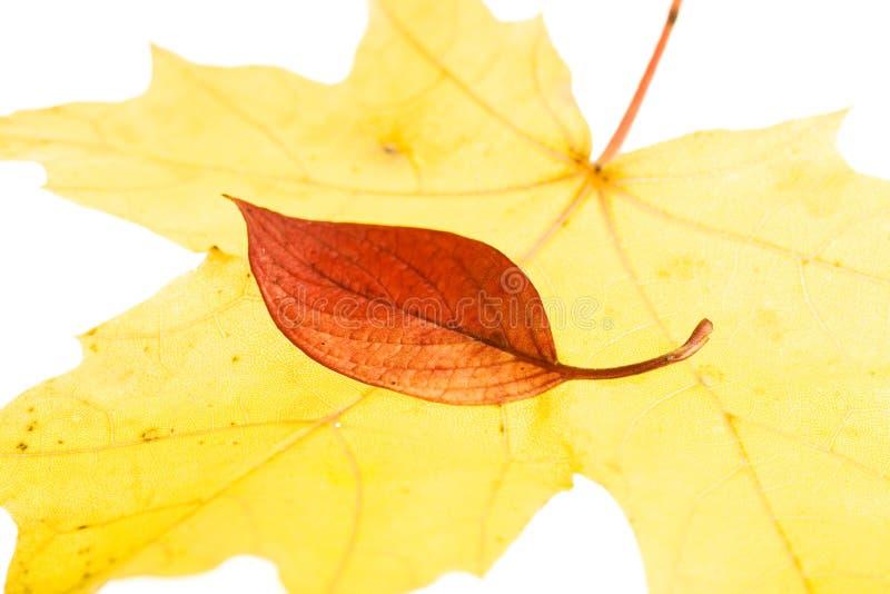 Download Foglio di autunno immagine stock. Immagine di filiale - 7301855