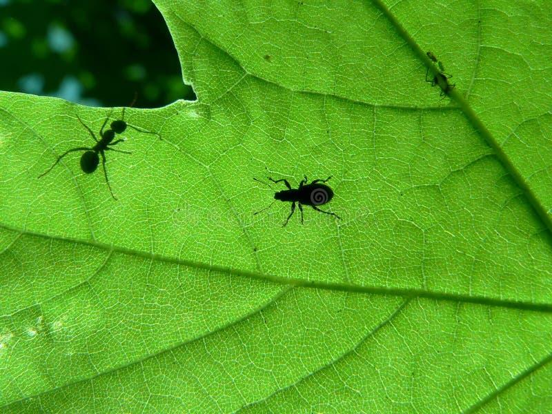 Foglio e formica fotografia stock