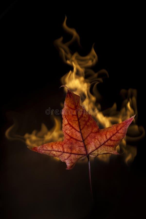 Foglio giallo di autunno in fuoco sul nero fotografia stock
