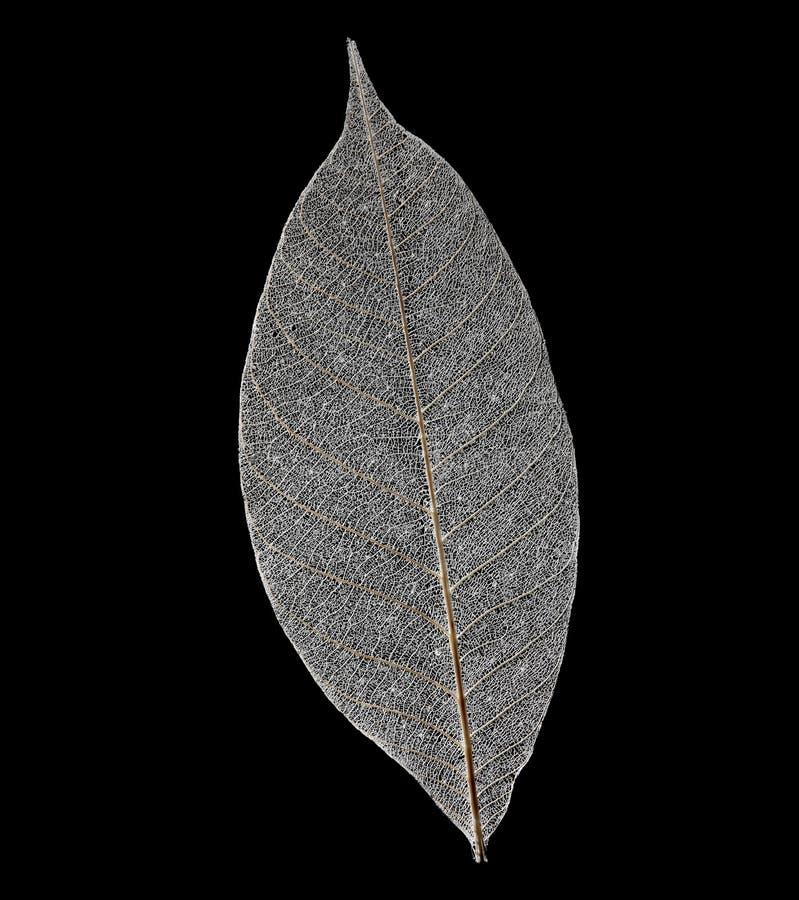 Download Foglio Trasparente Asciutto Immagine Stock - Immagine di albero, gambo: 7314707