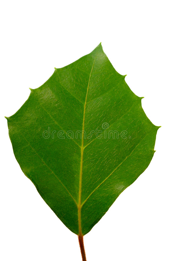 Foglio verde fotografia stock